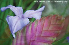 Bromeliad Fine Art Photo Print by BeckyTylerArt on Etsy