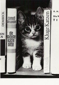 Die Katze kann Deutsch!