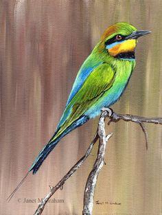 Rainbow Bee Eater Australian Bird SFA - Original hand painted wildlife acrylic painting by Australian Artist Janet M Graham