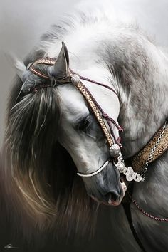 Beautiful portrait of a Spanish horse by Paul Miners.