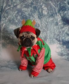 Boo The Pug Elf Santa's Little Helper #pug More