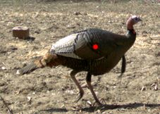 shooting a turkey   shot placement   turkey vitals fishing knots, trout  fishing, bass