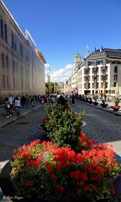 flowers blocking Oslo's main street, a legacy of July Norway Travel, Travel Europe, Great Places, Places To Visit, Norway Oslo, Beautiful Norway, Scandinavian Countries, Visit Norway, Stavanger