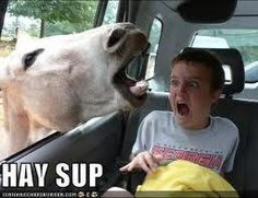 Funny photos, perfectly timed photos, horse in car window face boy Cute Funny Animals, Funny Animal Pictures, Funny Images, Funny Photos, Horse Pictures, Funniest Animals, Bing Images, Hilarious Pictures, Animal Pics