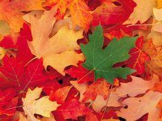 Imágenes hojas de otoño