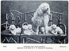 witte poedels 1920  illustratie de Prins 1921-1922