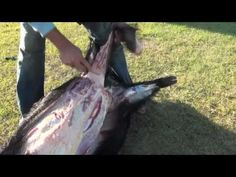 How To Butcher A Pig.(The Ultimate Pig Butchery Video). - YouTube