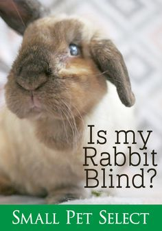 237 Best Rabbits Images In 2019 Hare Bunny Bunnies