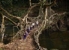 Tree Root Bridge, India  beautiful bridges