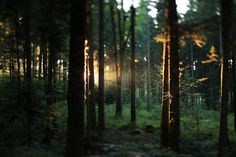 deep in the forest - Поиск в Google