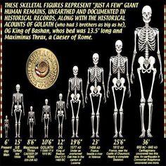 Ancient Aliens, Ancient History, Ufo, Giant Skeletons Found, Terre Plate, Nephilim Giants, Nephilim Bones, Fotografia Tutorial, Pseudo Science