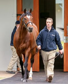 When Maurus won the Ipswich Cup back in June we were none too complimentary on his half-brother by Galileo who had made $3,600,000 guineas as a yearling but his sole win in seven starts came in a maiden at Gowran Park.