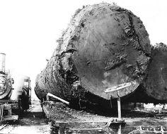 Spruce logs on railroad car c1918