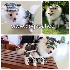 นองแปมแปม ใสset ทหาร มเสอสนข และหมวกสนข นารกมากๆคะ #reviewdogacat  Line : dogacatthailand www.dogacat.com http://ift.tt/1AD7Lzq http://ift.tt/1qvn5Jy Instagram : dogacat  #dogacat #reviewdogacat #เสอผาหมา #เสอสนข #เสอหมา #เสอผาสนข #เสอแมว #เสอผาแมว #แวนตาสนข #รองเทาสนข #puppyclothes #petstagram #puppy #petclothes #petsofinstagram #dogstagram #dogoftheday #dogdress #dogdaily #dogapparel #dogclothes #dogcute  #dogshoes #doghat #chihuahua #shihtsulovers #shihtzu #shihtsugram #ปลอกคอสนข #หมวกสนข…