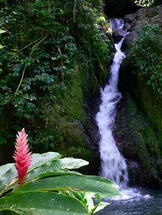 Mountain stream, Puerto Rico Highlands.