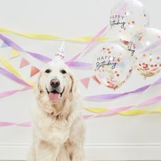 Treat your furry friend on their special day - use this and be sure to have a very happy birthday dog or cat! Each pack contains 3 x balloons, 1 Party Hat, 3 x Crepe Streamer rolls, 1 bunting Dog Birthday Hat, Dog First Birthday, Animal Birthday, Birthday Box, Birthday Cakes, Birthday Ideas, Happy Birthday Parties, Very Happy Birthday, Gold Birthday Party