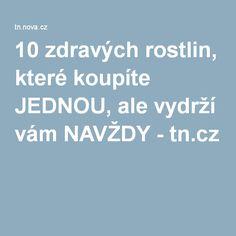 10 zdravých rostlin, které koupíte JEDNOU, ale vydrží vám NAVŽDY - tn.cz