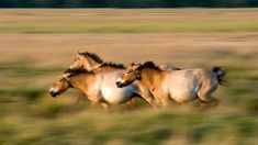 4477 best dna rna images on pinterest ancient dna upends the horse family tree ccuart Gallery