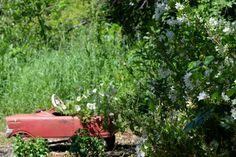 Pedal Car in the White Garden