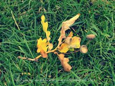 Acorns - Just Photos By Me | Just Photos By Me