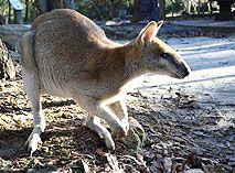 Australian Walkabout Wildlife Park