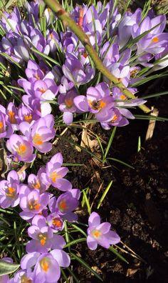 , love love love flowers and Sun
