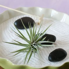 Air plant gardens look great and are easy to make. Get ready to create 3 different types of air plant gardens: a rock garden, a fairy garden & a zen garden. Garden Design Plans, Home Garden Design, Garden Landscape Design, Landscaping Design, Types Of Air Plants, Air Plant Display, Minimalist Garden, Bottle Garden, Low Maintenance Garden