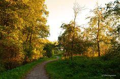https://flic.kr/p/MPavM5 | Herbst an der Berkel in Billerbeck | Münsterland 2016 Weitere Bilder sind auf www.billerbeck.org