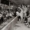 Singing in the Milking Parlor-  check out this weeks post on the Homestead Barn Hop #151 | The Prairie Homestead