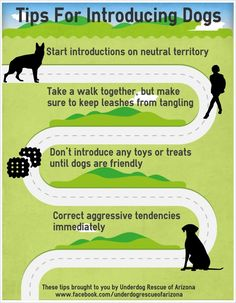 Introducing dogs to one another. Especially good to know if you have a shy or reactive dog.