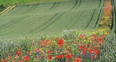 A MAGYAROK TUDÁSA: Kertészeti naptár - Zöldségeskert - Vetés - Növények és Rovarok Társítása