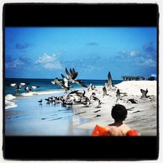 Logan chasing the birds on Boca Grande beach, 2010.