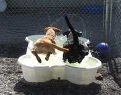 dog pool - Google-Suche