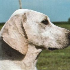 Cute Male and Female Dog Names with Meaning, There are many options chose the one you like - http://seedogpictures.com/male-dog-names-with-meanings-male-dog-names/