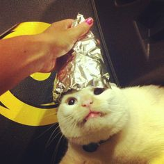 a cat with a foil hat