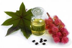 Castor Oil Benefits, Castor Oil Uses, Benefits of Castor Oil, Uses of Castor Oil,Uses for Castor Oil Castor Oil Uses, Castor Oil Benefits, Castor Oil For Hair, Hair Oil, Facial Warts, Home Remedies For Arthritis, Egg For Hair, Regrow Hair, Juicing For Health