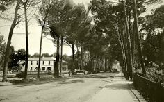 Wynberg Main Road around 1902 Cape Town South Africa, Most Beautiful Cities, Antique Maps, Old Buildings, Historical Photos, Homeland, Old Photos, Maine, City