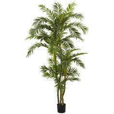 6' Curvy Parlor Palm Silk Tree
