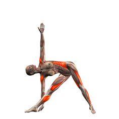 Right triangle pose - Trikonasana right - Yoga Poses | YOGA.com