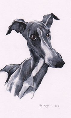 Whippet drawing. Custom pet art by Jim Griffiths.  https://www.etsy.com/shop/JimGriffithsArt?ref=hdr_shop_menu