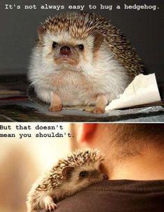 awwwwww.... hedgehogs