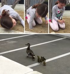 6-Year-Old Rescues 8 Ducklings From Drain Pipe
