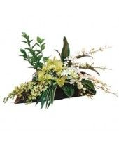 Deliver Flowers Cheap Indonesia Flowers Delivered, Plants, Plant, Planets