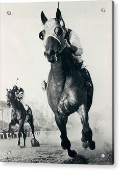 Framing Photography, Horse Photography, Horse Wall Art, Thoroughbred Horse, Appaloosa Horses, Retro Images, Thing 1, Racehorse, Show Horses