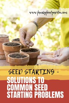 Learn some solutions to common seed starting problems such as leggy plants molds or it simply just didn't sprout. Here's everything you need to know about seed starting plus a few tips on how to handle them. Gardening For Beginners, Gardening Tips, Flower Gardening, Flower Garden Plans, Garden Ideas, Garden Inspiration, Healthy Fruits And Vegetables, Greenhouse Growing, Herb Seeds