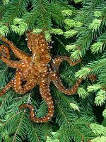 Save the Tree Octopus: Great site full of deceptively fake information for teaching kids about testing the validity of online resources.