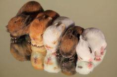 cute newborn bunny babies in a row