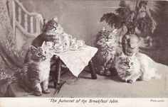Antique Cat Breakfast Tea Series 1527 Comic Landor 1900s Postcard | eBay