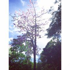 @ UPRRP #nature #tree #spring