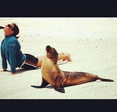 Animals that do yoga better than you. 34 Animals That Can Yoga. Not sure how but these animals have this yoga thing down pat. Funny photos of animals. Yoga Humor, Pranayama, Yoga Inspiration, Fitness Inspiration, Image Elephant, Funny Animals, Cute Animals, Animal Yoga, Office Yoga